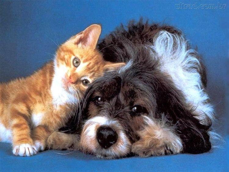 Cuidados com cães e gatos