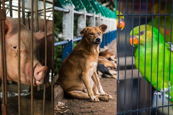 Maus tratos contra animais